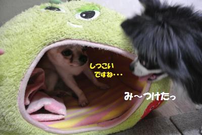 DSC_5060_convert_20140513110354.jpg
