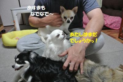 DSC_5148_convert_20140521112429.jpg