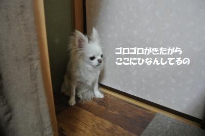 DSC_5294_convert_20140523103346.jpg
