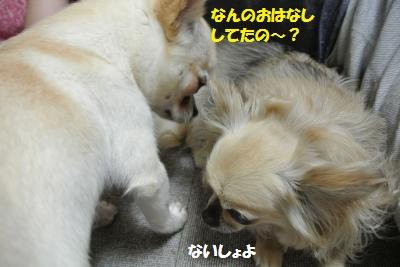 DSC_5430_convert_20140529112127.jpg