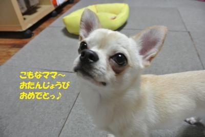 DSC_5465_convert_20140530110026.jpg