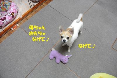 DSC_5492_convert_20140530110611.jpg