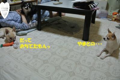 DSC_5581_convert_20140602113442.jpg