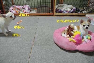DSC_5611_convert_20140603110619.jpg