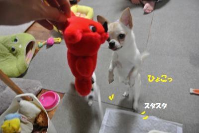 DSC_5637_convert_20140606113731.jpg