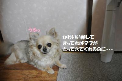 DSC_5687_convert_20140606144356.jpg