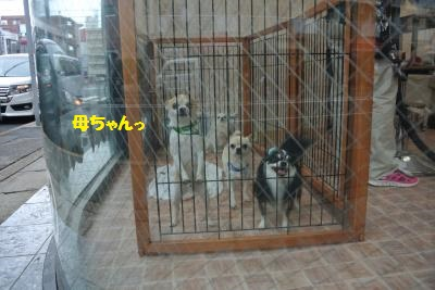DSC_5689_convert_20140609104338.jpg