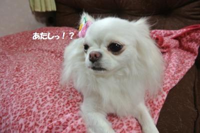 DSC_5693_convert_20140610114942.jpg