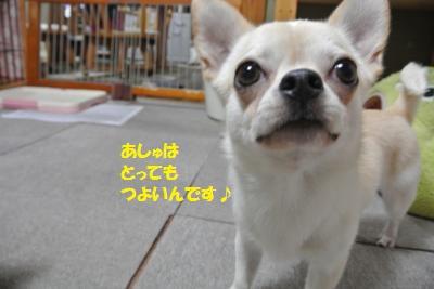 DSC_5871_convert_20140613150158.jpg