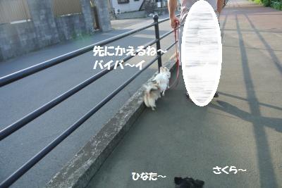DSC_5917_convert_20140618112552.jpg