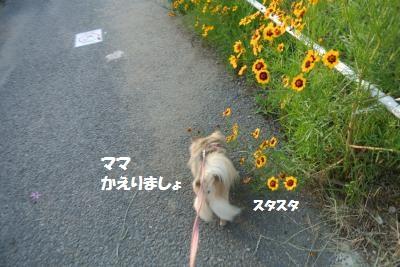 DSC_5975_convert_20140617112105.jpg