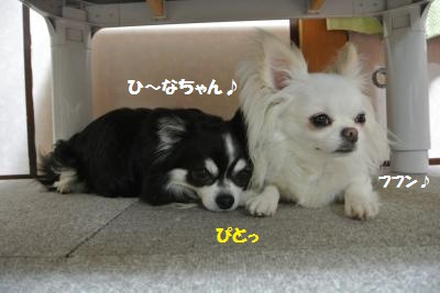 DSC_5979_convert_20140620112036.jpg