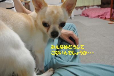 DSC_6161_convert_20140701093341.jpg