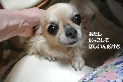 DSC_6195_convert_20140704112219.jpg