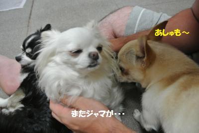DSC_6283_convert_20140710103524.jpg