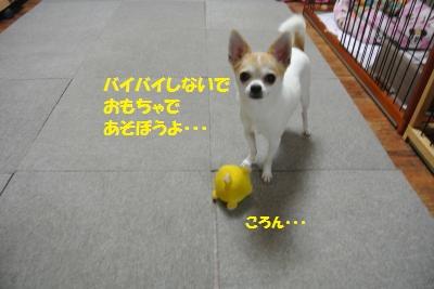 DSC_6287_convert_20140711103236.jpg