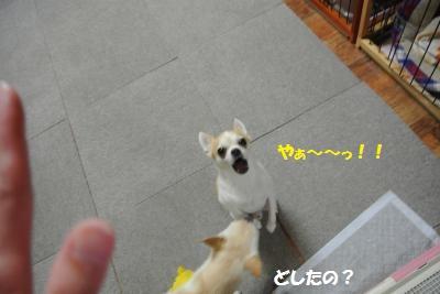 DSC_6299_convert_20140711103317.jpg