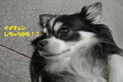 DSC_6315_convert_20140711103537.jpg