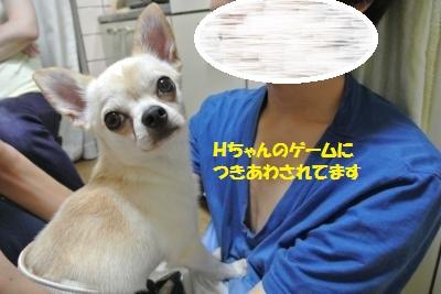 DSC_6618_convert_20140723140024.jpg