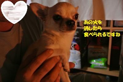 DSC_6679_convert_20140728111243.jpg