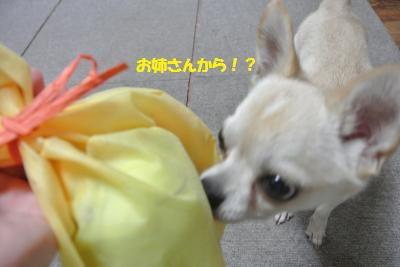 DSC_6694_convert_20140729110700.jpg
