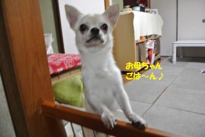 DSC_6827_convert_20140801110833.jpg