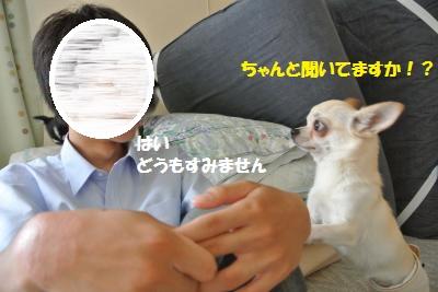 DSC_6911_convert_20140804111112.jpg