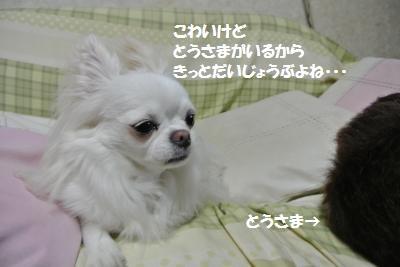 DSC_7017_convert_20140806102151.jpg