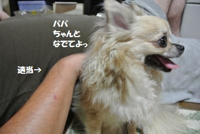 DSC_7019_convert_20140806102217.jpg