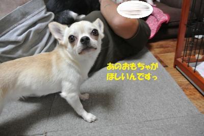 DSC_7060_convert_20140808110724.jpg