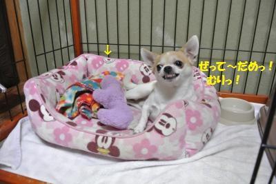 DSC_7061_convert_20140808110749.jpg