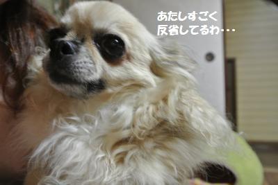 DSC_7107_convert_20140808150038.jpg