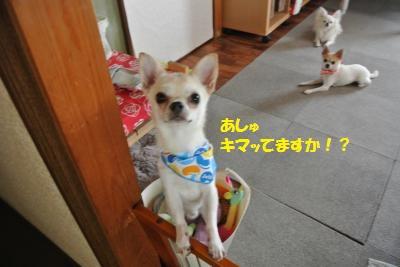 DSC_7112_convert_20140811104626.jpg