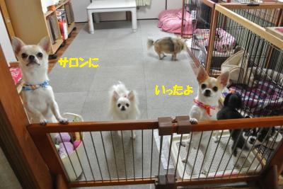 DSC_7153_convert_20140811103251.jpg
