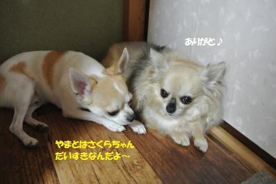 DSC_7235_convert_20140912105725.jpg