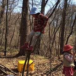 軽々と木に登る