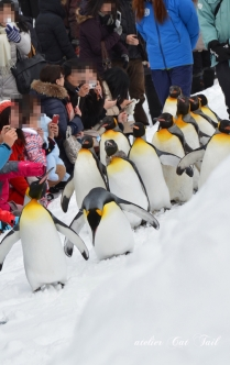 ペンギン散歩♪