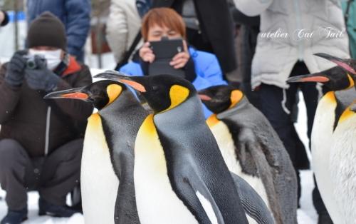 ペンギン散歩♪2