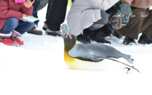 ペンギン散歩♪4