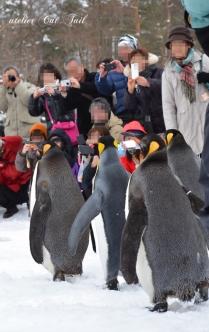 ペンギン散歩♪3