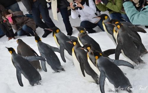ペンギン散歩♪5