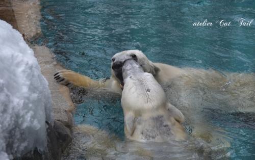 白クマさん♪4