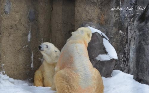 白クマさん♪5