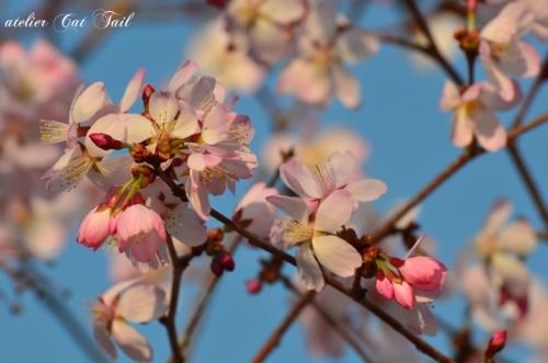 桜♪2014