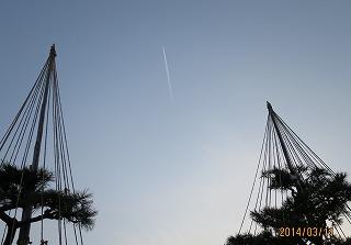 松と飛行雲