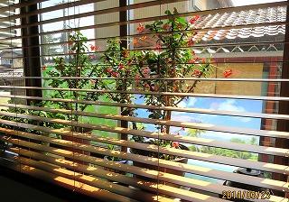 M家の窓辺