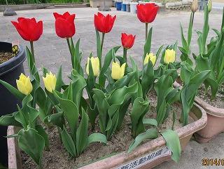 2段目も開花