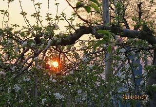 樹間に夕陽
