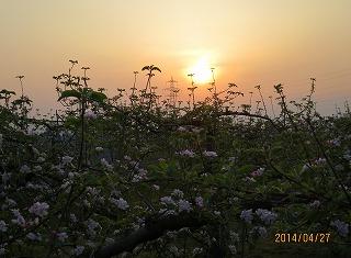 春霞む・日の出