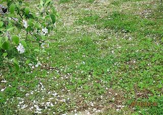 花を落とすの雨